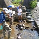 天神川簡易魚道のメンテナンス作業を行いました。